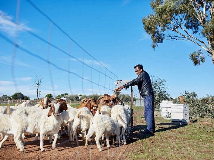 Selba Farm